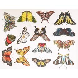 décalcomanie petits papillons couleurs